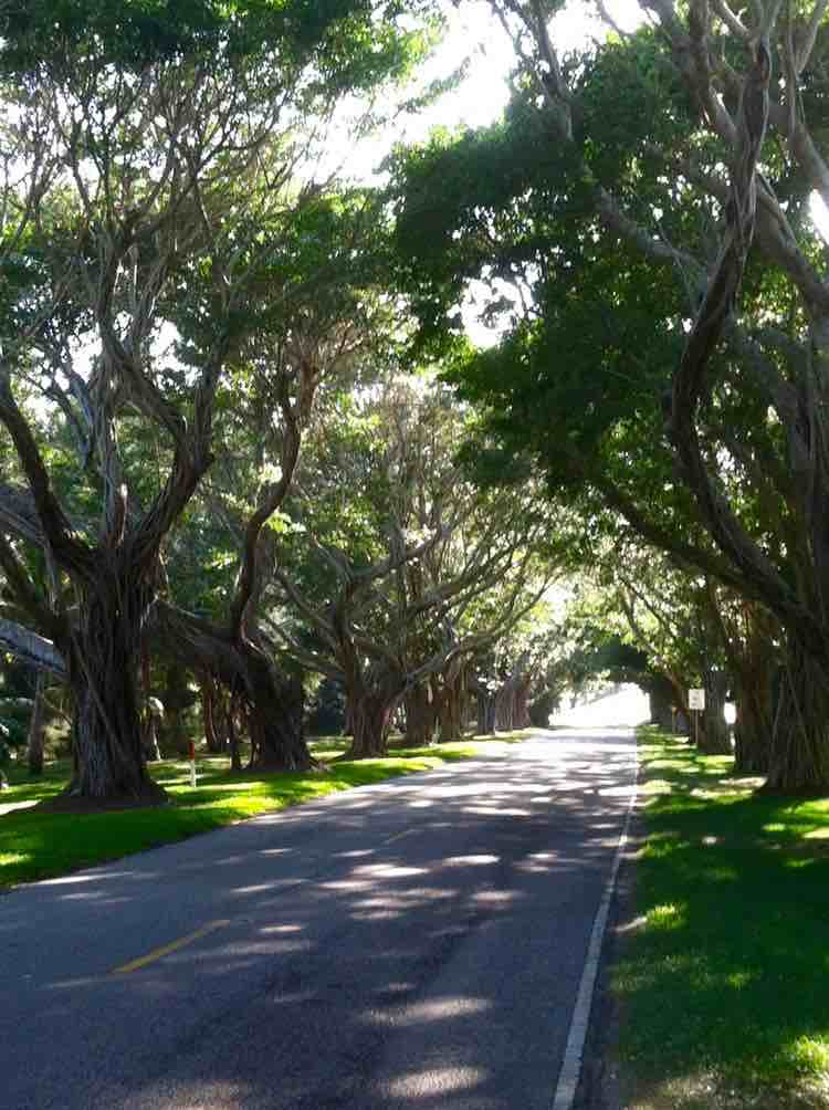 Florida's version of the Dark Hedges, A1A Highway, cool Florida attractions