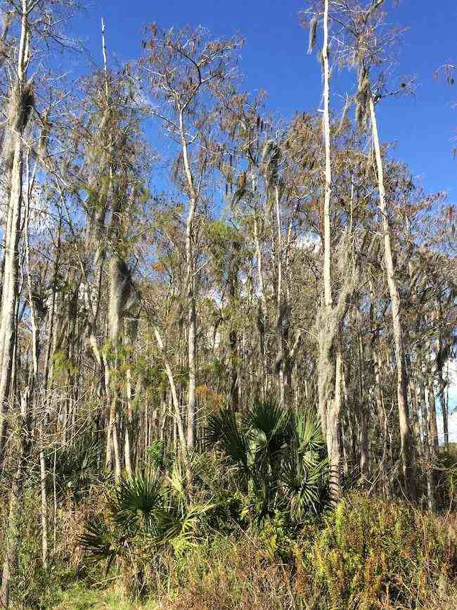 scenic drives in Florida: small roads near Naples