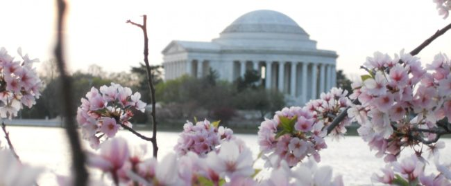 Why Now Is The Best Time To Visit Washington Dc