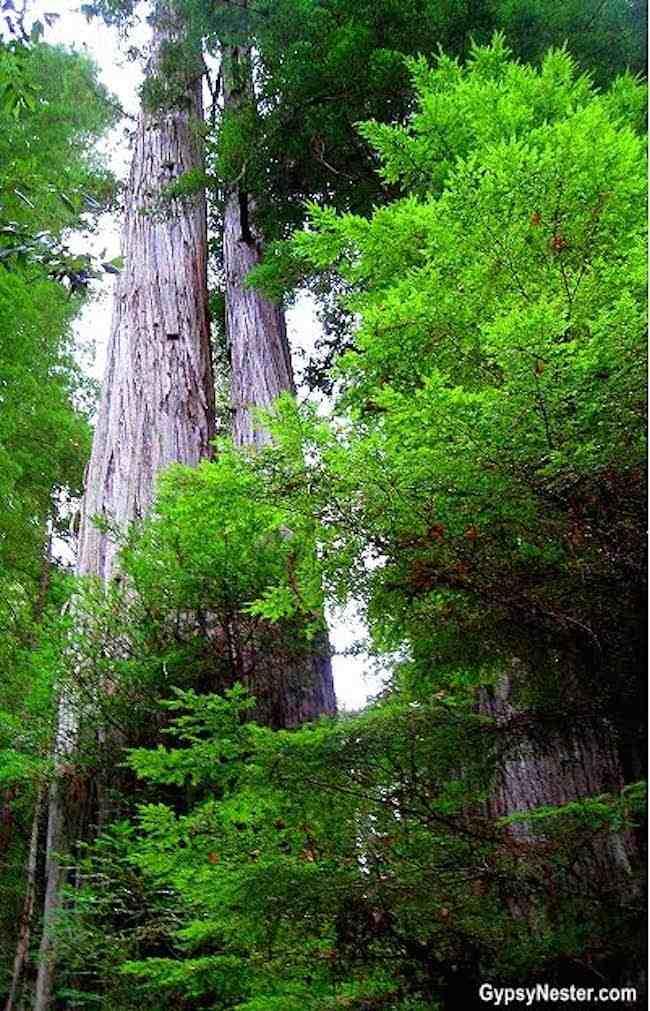 California: Avenue of the Giants