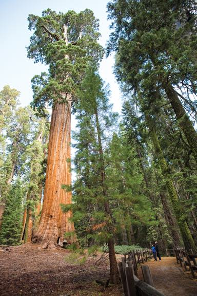 no-tech destinations: Sequoia and Kings Canyon National Parks, California