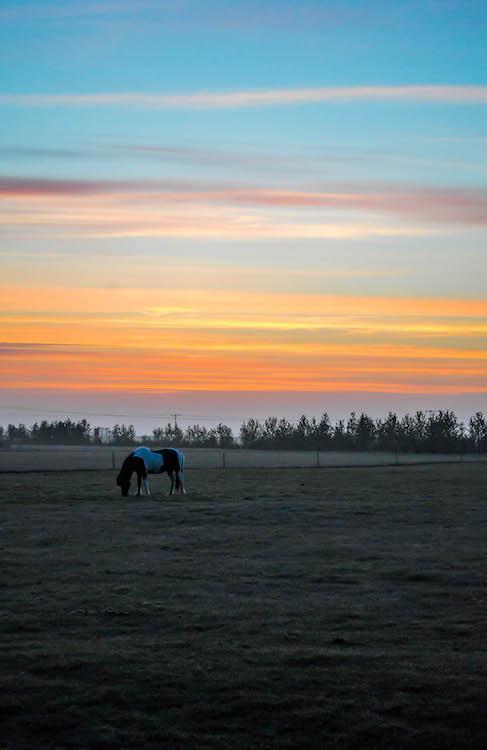 iceland photo horses