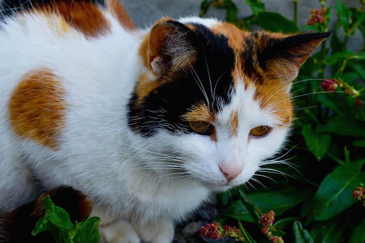iceland photo cat