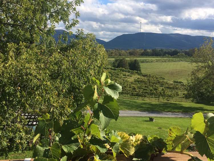 Things to Do in Shenandoah Valley: Shenandoah Vineyards