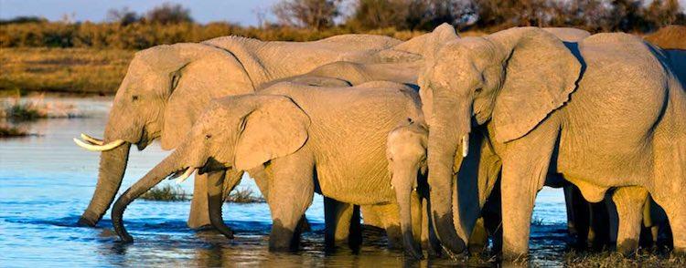 Vantage Adventure Travel Tour in Africa