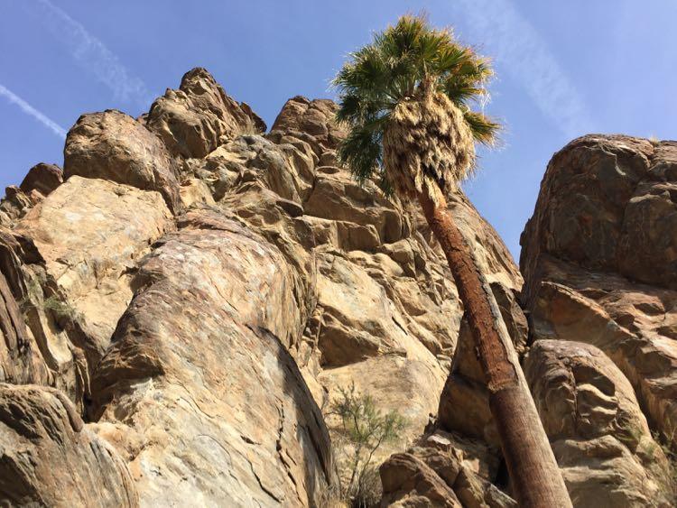 Andreas Canyon, Palm Springs California