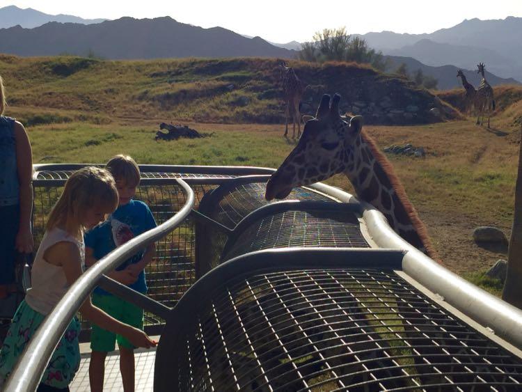 The Living Desert giraffe encounter Palm Springs California