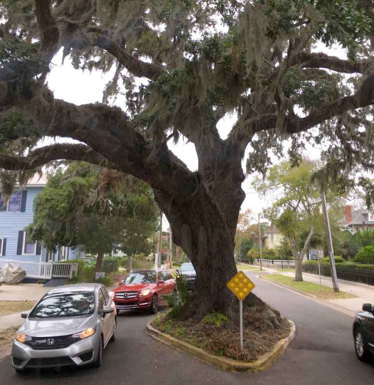 8 Great Things To Do in Amelia Island Florida.
