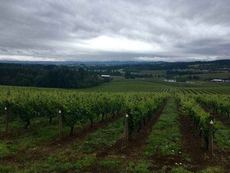 things to do in Tualatin Valley Oregon. Article and photo by Charles McCool for McCool Travel.