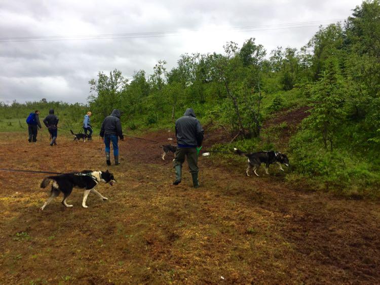 Hiking with Huskies Tromso Norway
